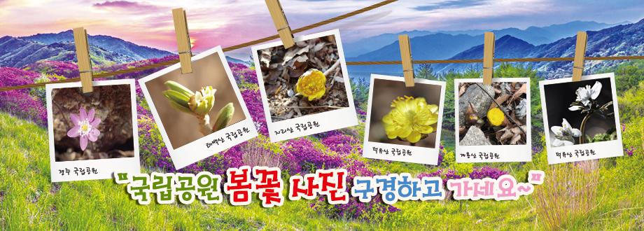 국립공원 봄꽃사진 구경하고 가세요